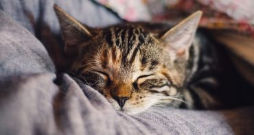 Can nutrition affect your sleep?